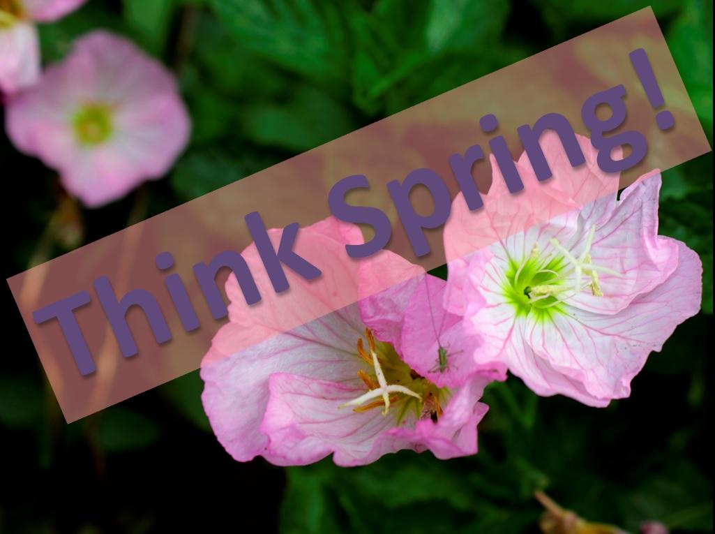 ThinkSpring Flowers